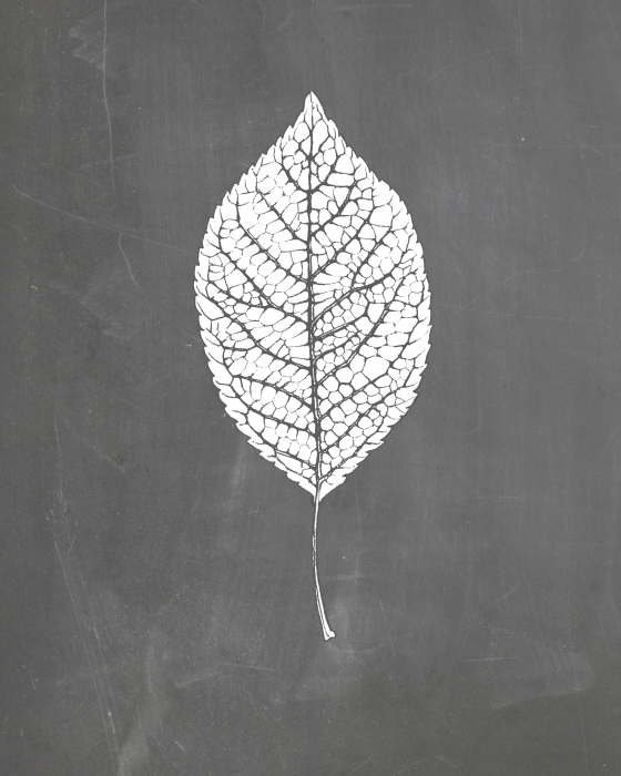 Chalkboard Leaf Printable