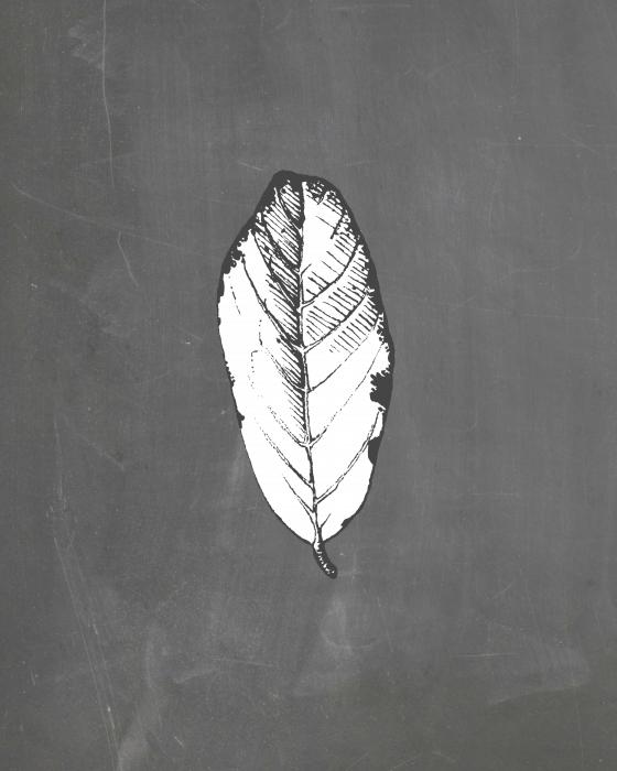 Leaf Printables