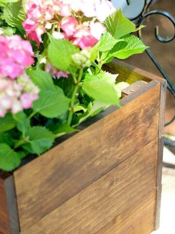 The corner of a box planter and the pink flowers and green leaves of the plant above the rim of the planter