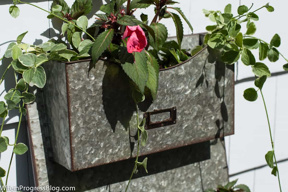 Instead of mail, the holder displays lovely trailing leaves and pink flowers